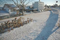 宮崎の雪模様I