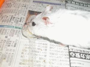 Nana-Kiseichu3.jpg