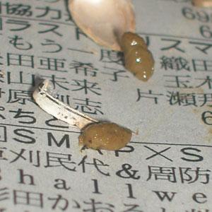 Nana-Kiseichu4.jpg