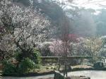 熱海梅園1