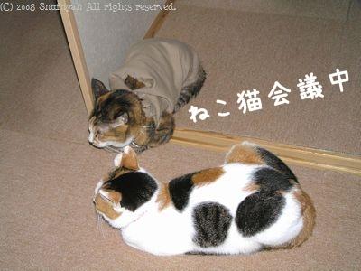 ねこ猫会議中