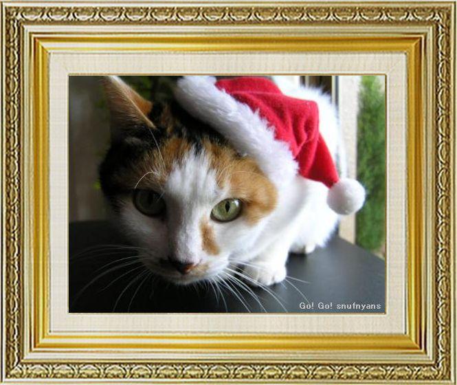 ねこ 猫 クリスマス祭り07すなふ家の『やる気まんまん麻呂サンタ』