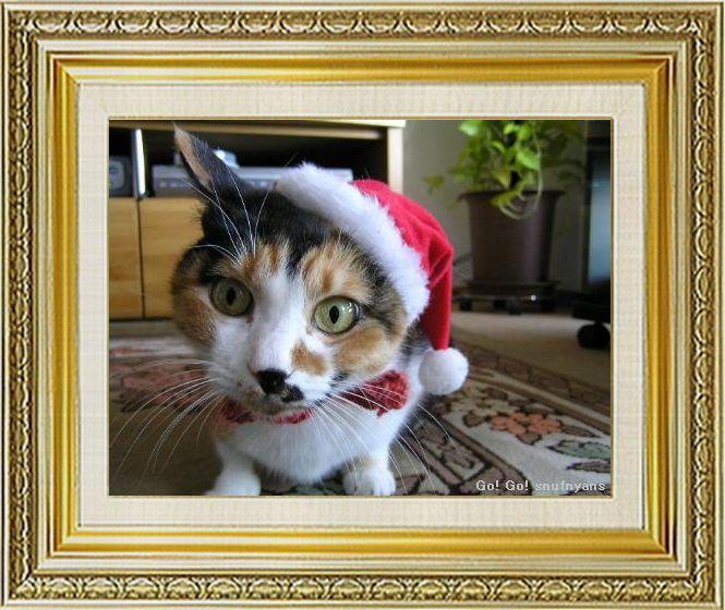 ねこ 猫 クリスマス祭り08すなふ家の『びっくりサンタ』