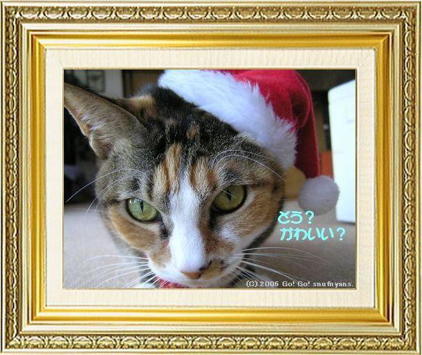 ねこ 猫 クリスマス祭り09すなふ家の『らぶり~タカサンタ』