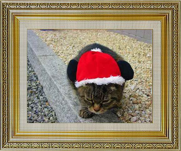 ねこ 猫 クリスマス祭り15由乃さま家猫ドンサンタ