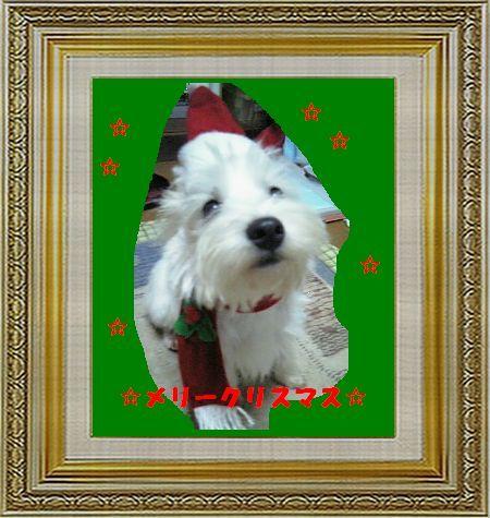ねこ 猫 クリスマス祭り16女将さま家雛子サンタ