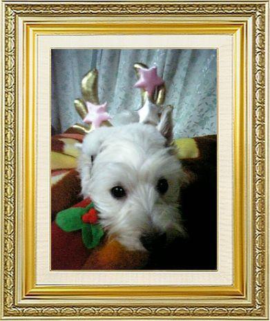 ねこ 猫 クリスマス祭り17女将さま家雛子トナカイ