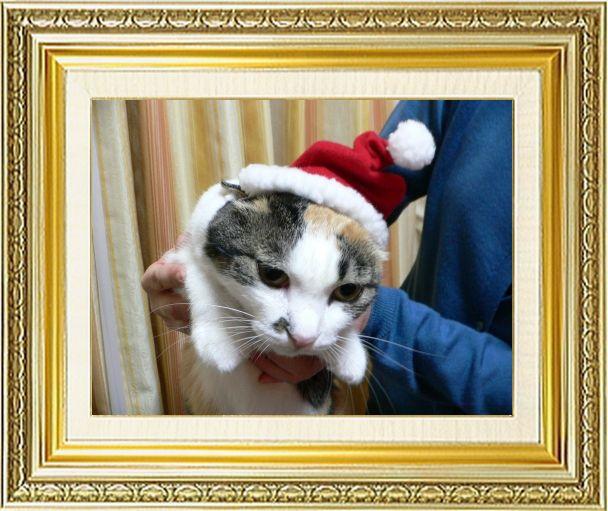 ねこ 猫 クリスマス祭り20しも1さま家2005年知恵蔵サンタ