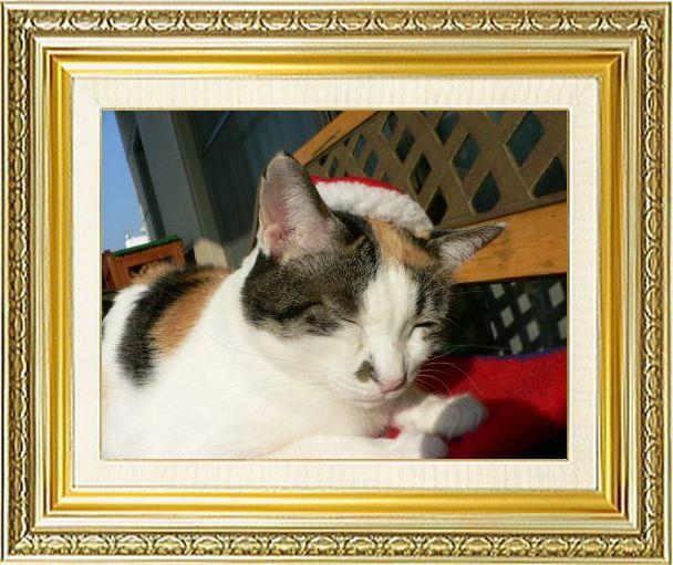 ねこ 猫 クリスマス祭り21しも1さま家2006年知恵蔵サンタ
