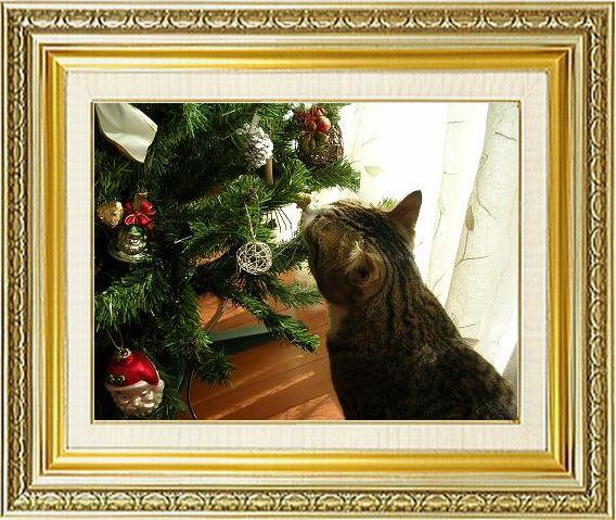 ねこ 猫 クリスマス祭り22tabirinさま家『ツリーにちょっかいかけるたびおくん』