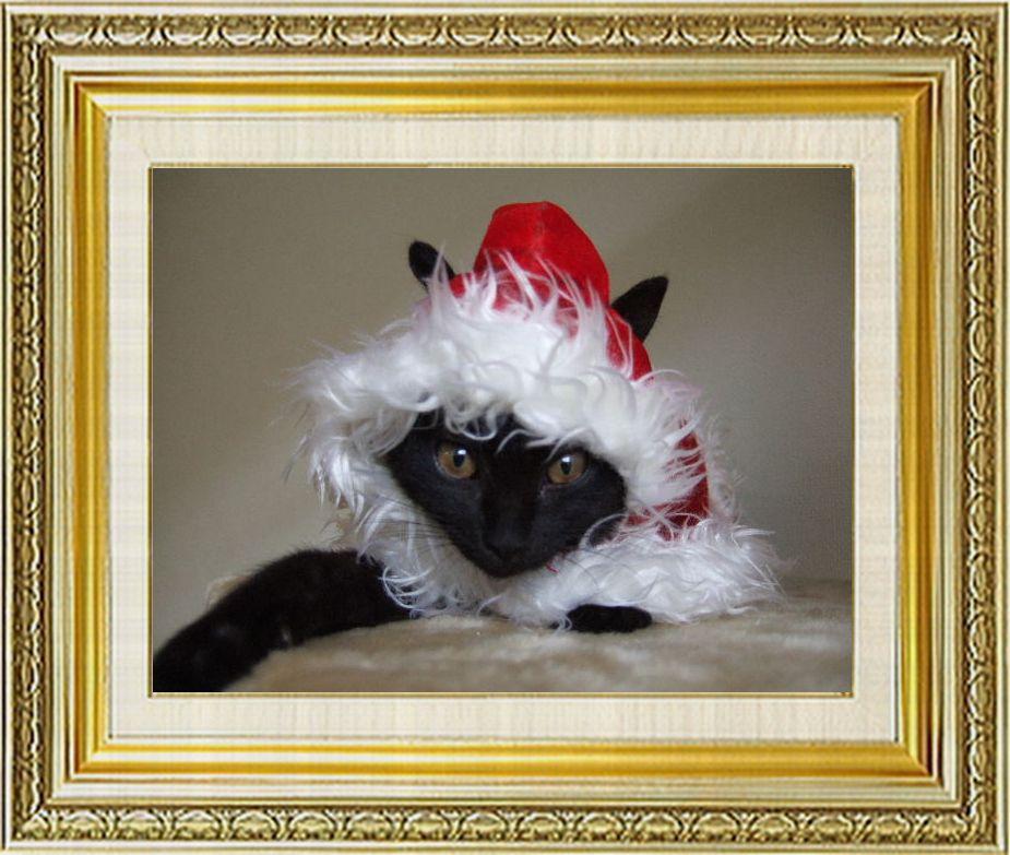 ねこ 猫 クリスマス祭り23みーやさま家『あんずサンタ』