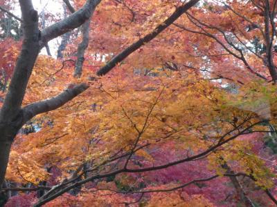 2008.秋 筑波山へ (9)