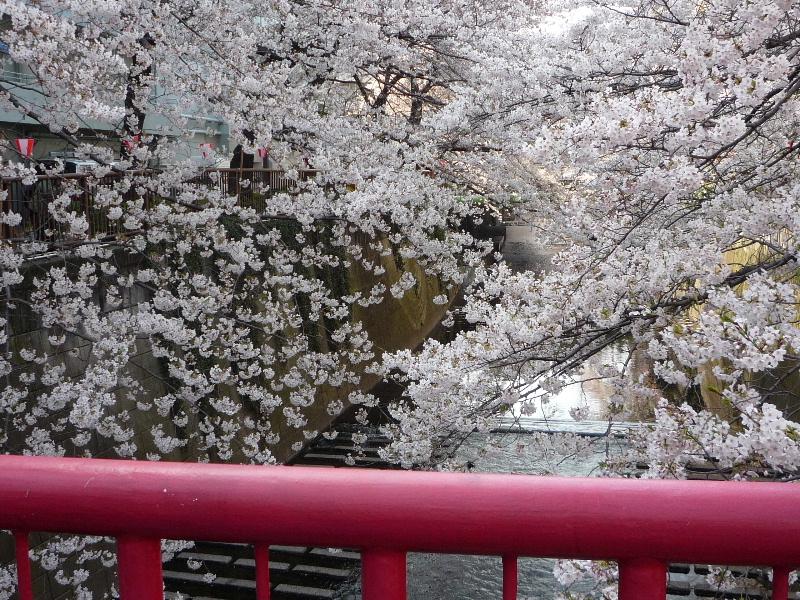 1.東京土山人(桜2)