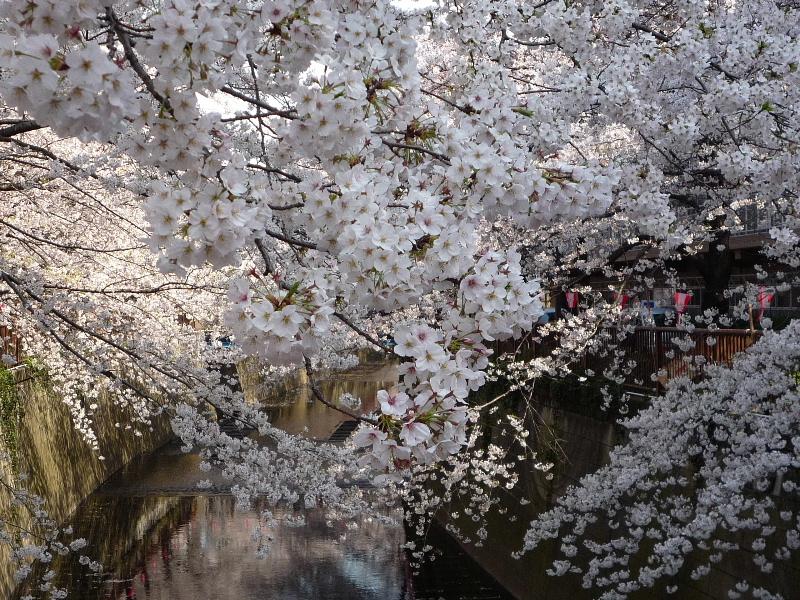 1.東京土山人(桜3)