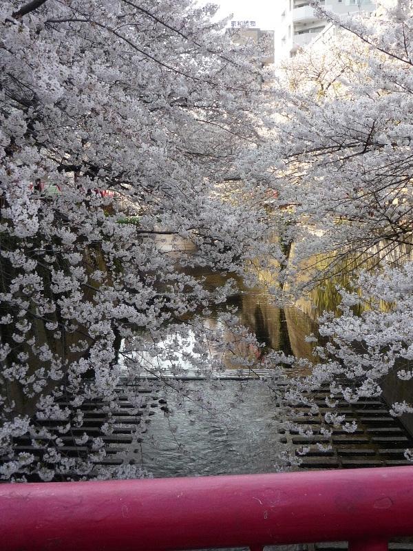 1.東京土山人(桜6)