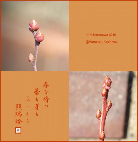 10127ブルーベリーの芽と蕾