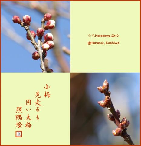 100201梅の蕾