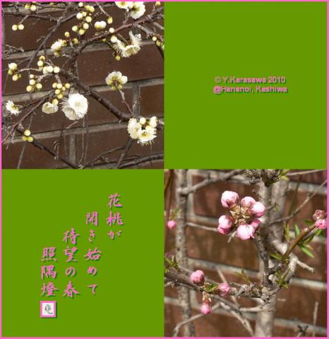 100303花桃