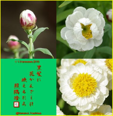 100317花かんざし