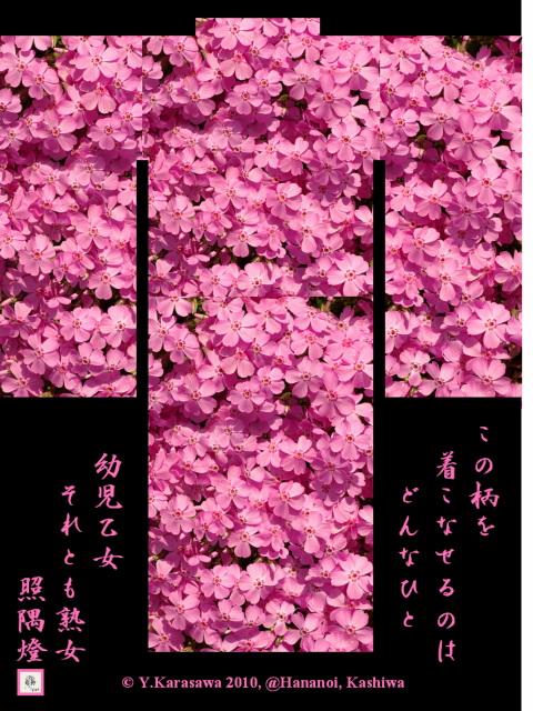 100318芝桜絵羽織