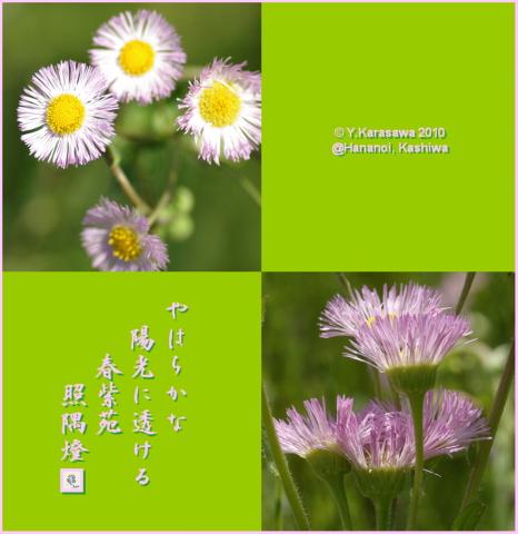 10325春紫苑