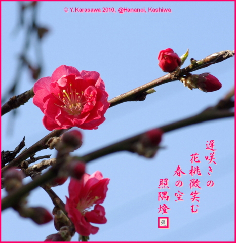 100330花桃紅