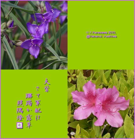100421大紫