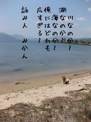 IMG_1279 - コピー