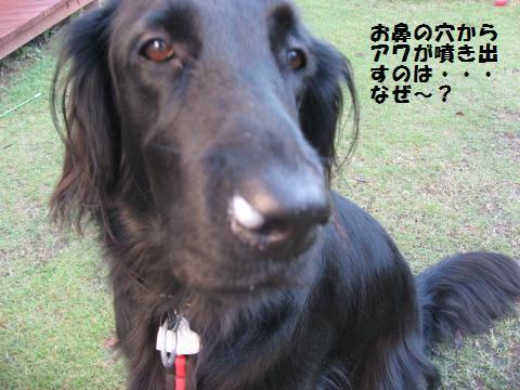 001_convert_20091102203607.jpg