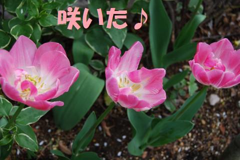 001_convert_20100414195258.jpg