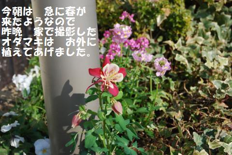 002_convert_20100210111201.jpg