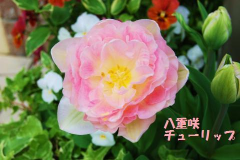 002_convert_20100414200509.jpg
