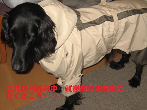 002_convert_20100429114216.jpg