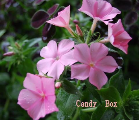 003_convert_20100520173226.jpg