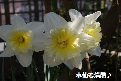 004_convert_20100311135100.jpg