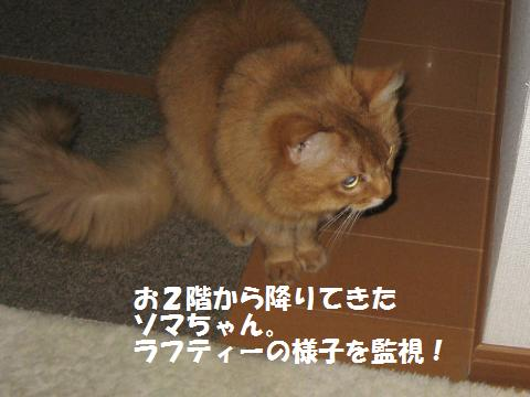 004_convert_20100429114247.jpg