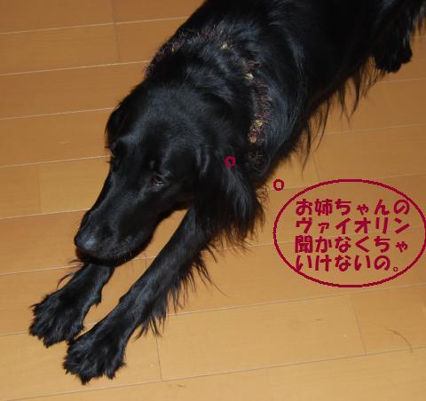005_convert_20091228223541.jpg