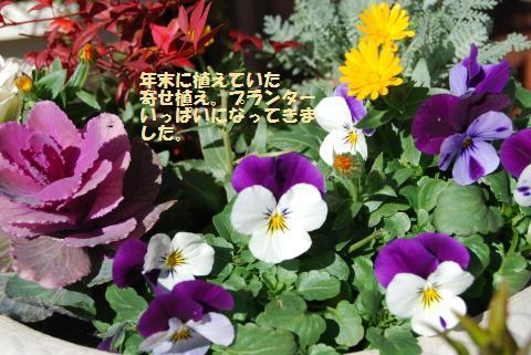 005_convert_20100123141709.jpg