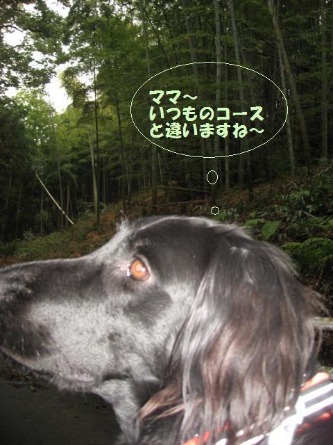 005_convert_20100212225546.jpg