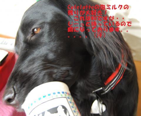 006_convert_20091223223041.jpg