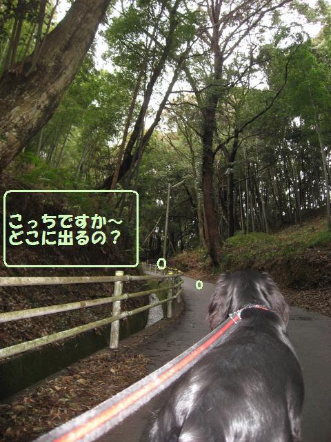 006_convert_20100212224835.jpg