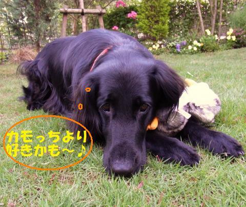 006_convert_20100527215136.jpg