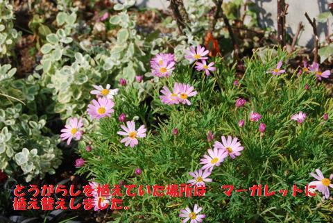 007_convert_20100210111812.jpg