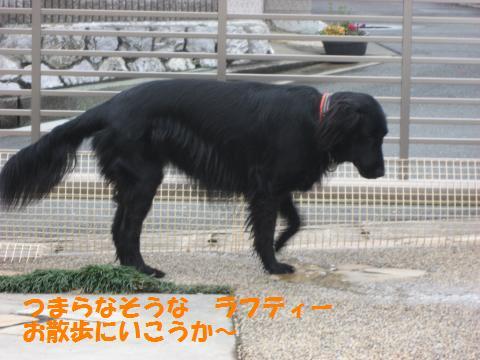 007_convert_20100212224943.jpg