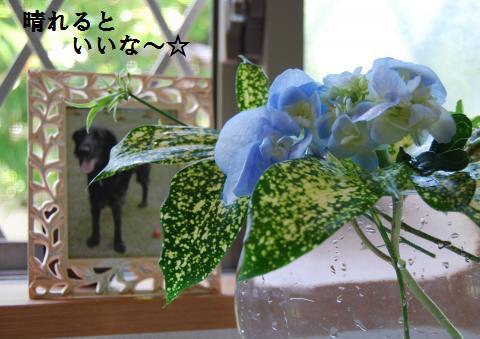 007_convert_20100706075625.jpg
