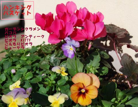 009_convert_20091027173314.jpg