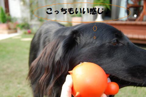 011_convert_20091030123719.jpg
