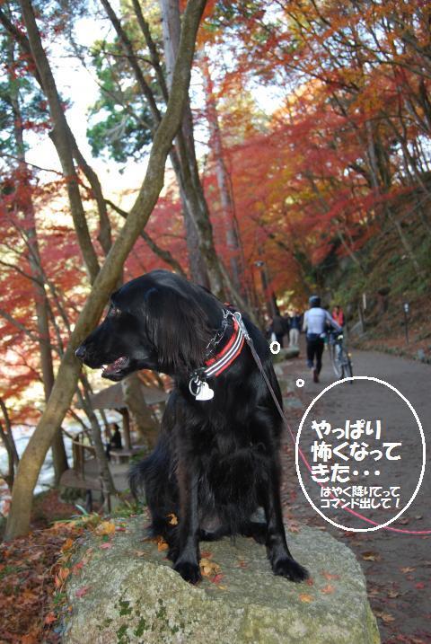 011_convert_20091130113359.jpg