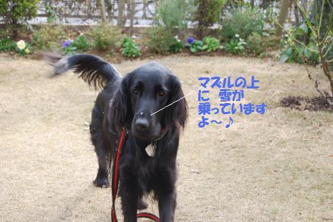 011_convert_20100113164722.jpg