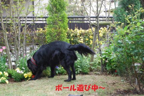 012_convert_20100414200644.jpg